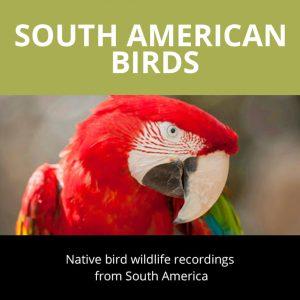 SouthAmerican Birds Sounds